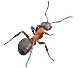 hubeni-mravencu